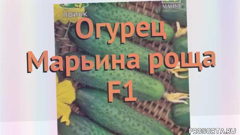 Огурец «кибрия f1»: описание гибридного сорта, фото и отзывы