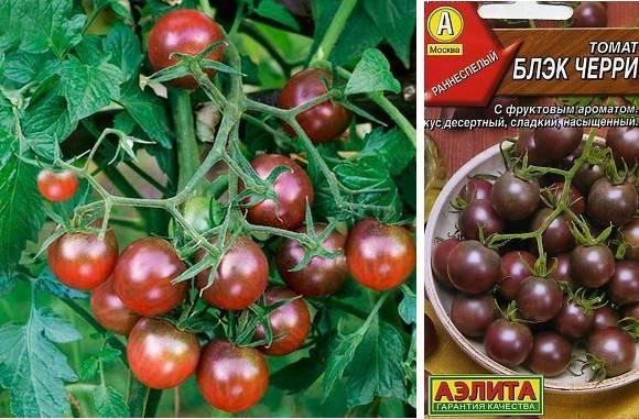 Чёрные сорта помидоров: описания с фото, в том числе чёрный принц