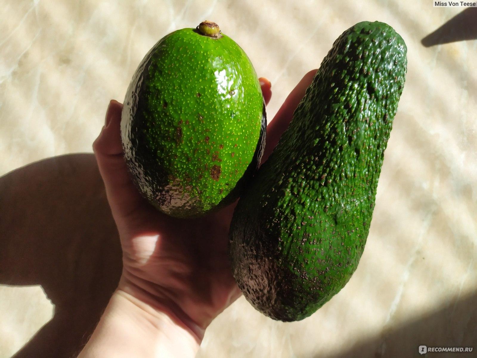 Описание и история селекции сорта авокадо хаас, применение и чем отличается от обычного