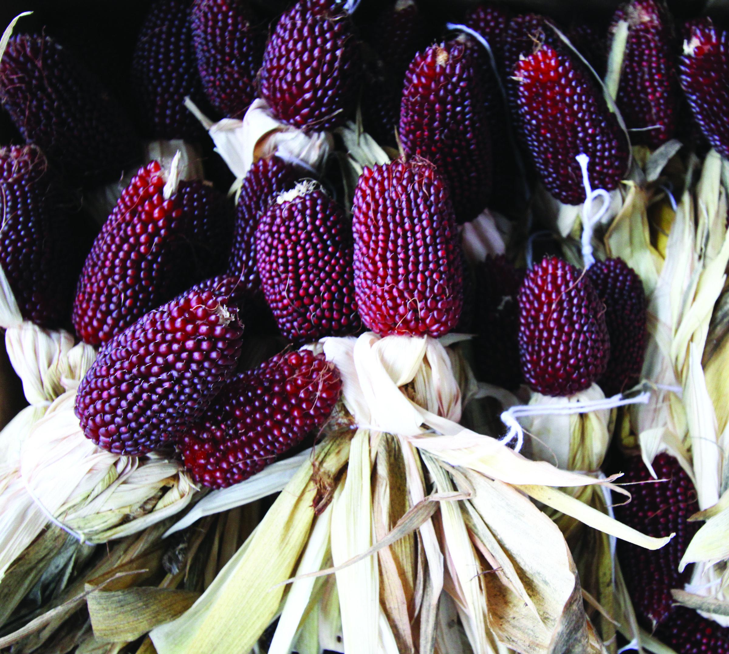 Выбор лучшего сорта кукурузы. лучшее время для посадки семян на участке - огород, сад, балкон - медиаплатформа миртесен