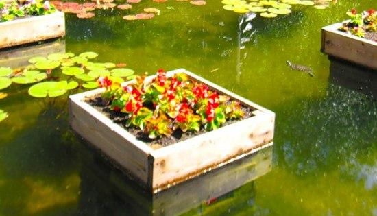 Плавающие клумбы: как сделать миниатюрный сад наводе