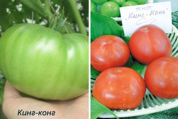 Описание томата Кинг-Конг и рекомендации по выращиванию растения