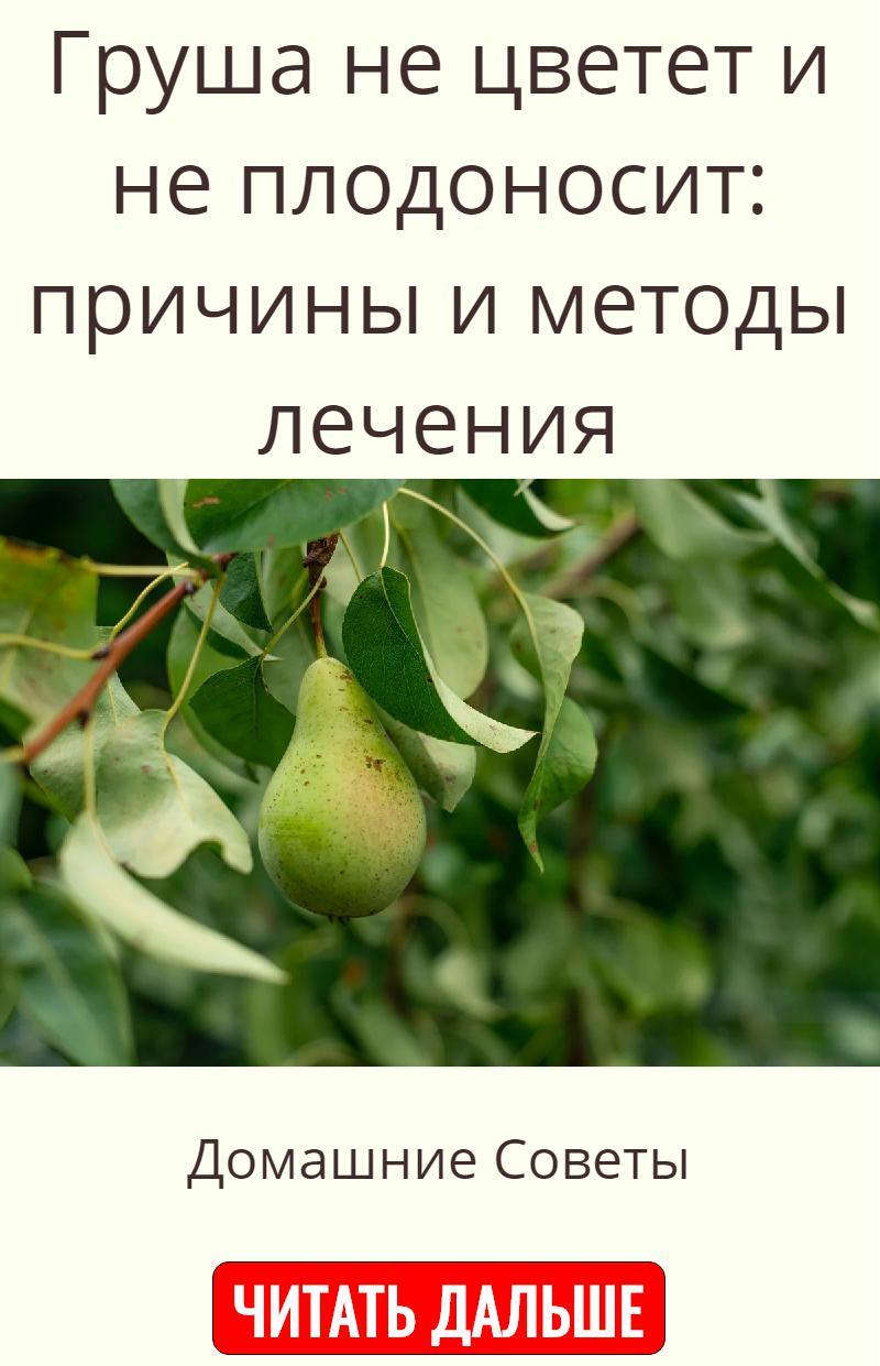 Почему груша не плодоносит? в чем причина и что делать, если груша не цветёт или сбрасывает цветы - секреты садоводов