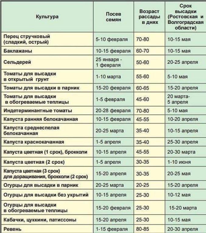 Лучшие сорта огурцов для открытого грунта: топ-20 самых урожайных и вкусных зеленцов