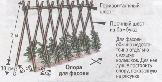 Как сделать шпалеры и подвязать горох на грядке: распишем по пунктам