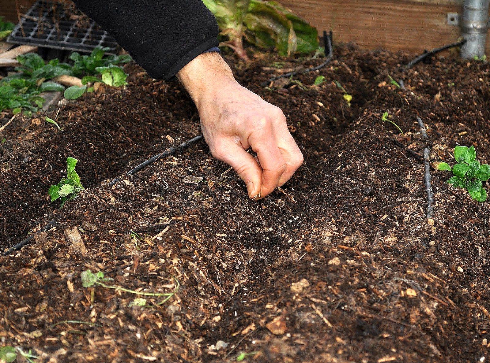 Цветы каллы. выращивание в саду: сроки посадки, особенности ухода - sadovnikam.ru