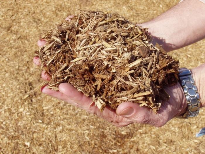 Чем полить дерево, чтобы засохло быстрее: народные средства, химия