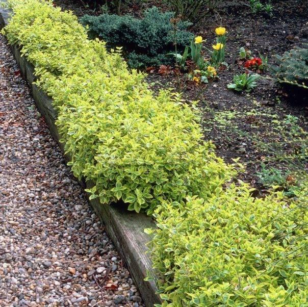Садовый бордюр: варианты установки и изготовления своими руками стильных и красивых ограждений