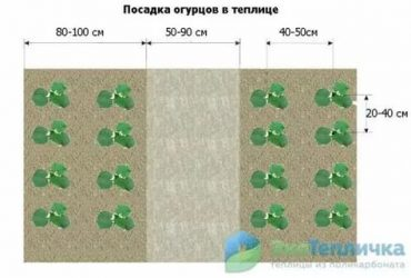 Как правильно посадить огурцы в открытый грунт семенами, на какую глубину