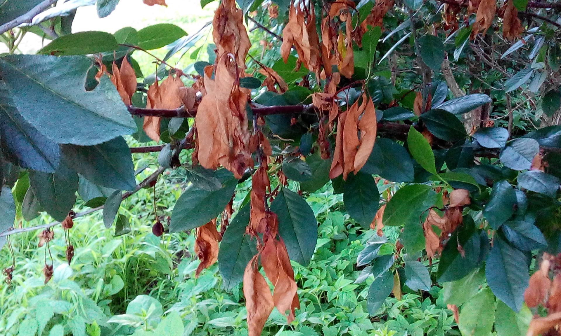 Болезни яблони: описание с фото и лечение, названия заболеваний листьев, ствола и плодов