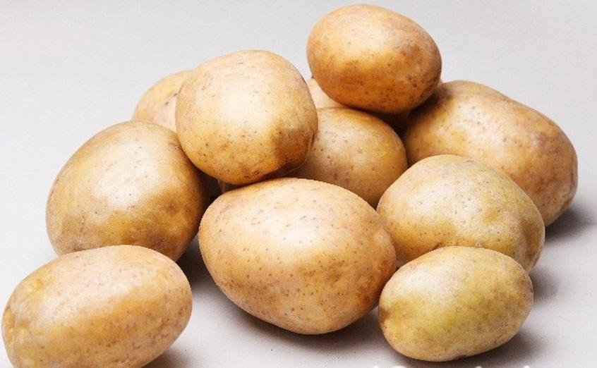 Картофель ароза: красивый, вкусный, высокоурожайный сорт