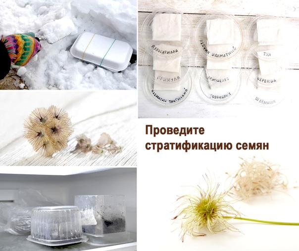 Один из этапов подготовки посадочного материала — стратификация семян в домашних условиях: суть и цель метода, способы проведения