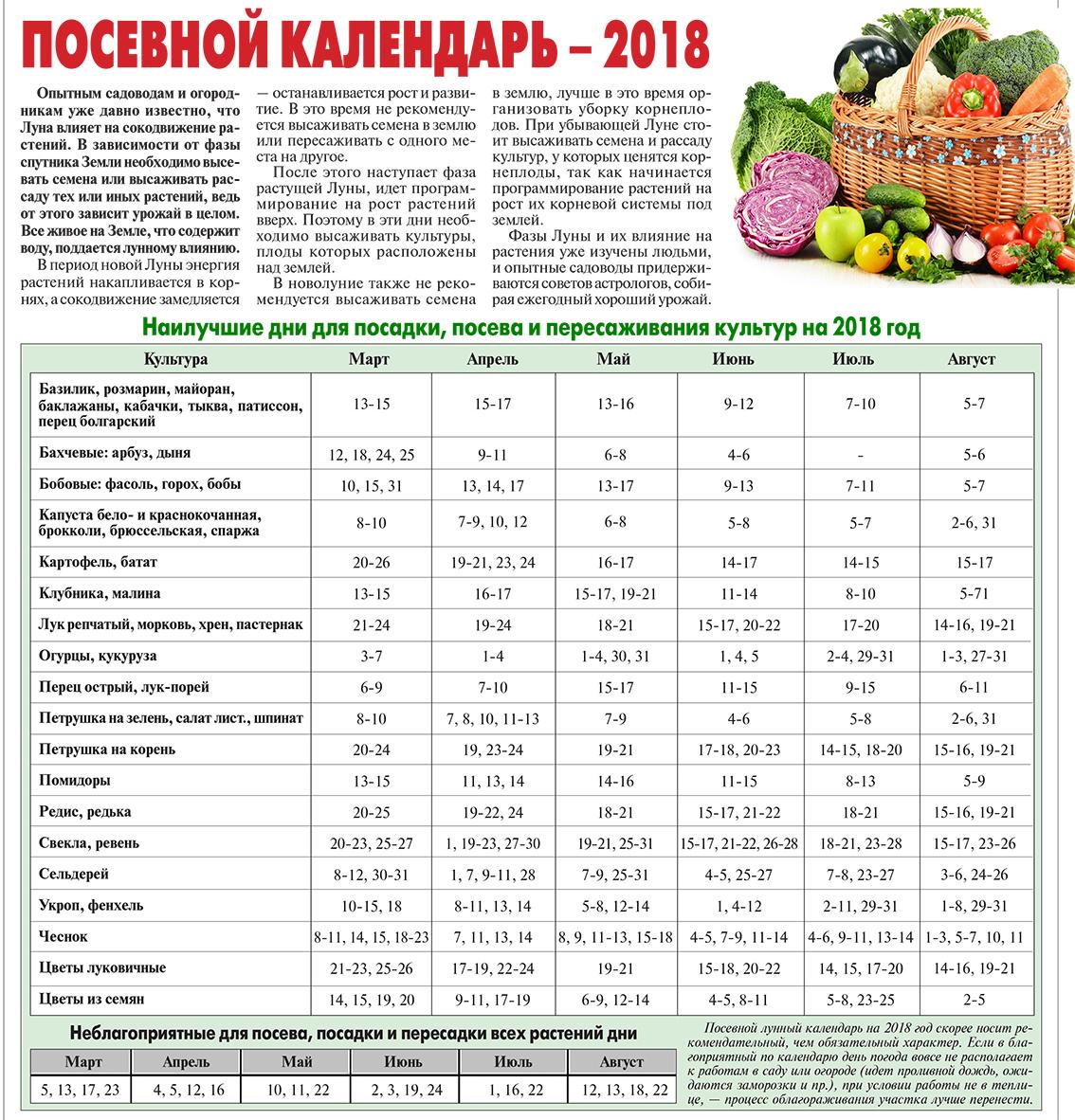 Когда сажать морковь и свеклу весной в 2021 году по лунному календарю: самые благоприятные дни, выбор соседей по грядке и особенности выращивания