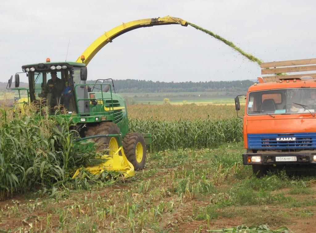 Технология возделывания кукурузы на силос и зеленый корм | fermer.ru - фермер.ру - главный фермерский портал - все о бизнесе в сельском хозяйстве. форум фермеров.