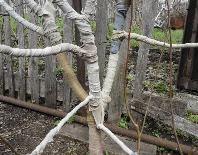 Подготовка яблони к зиме на урале: когда укрывать саженцы, как подготовить к зимовке