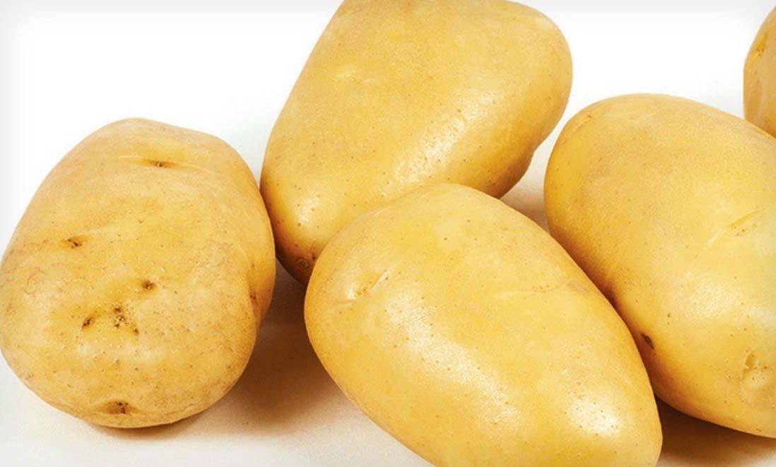 Картофель зекура: характеристика сорта, отзывы, вкусовые качества