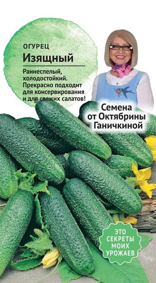Сорт огурцов изящный: описание, отзывы, фото, посадка и уход