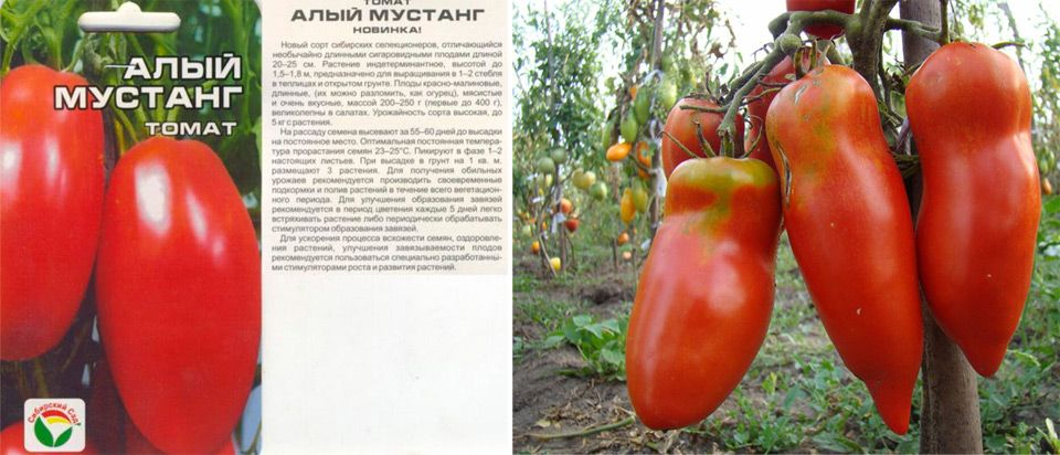 Характеристика и описание томата кадет, выращивание сорта рассадным способом
