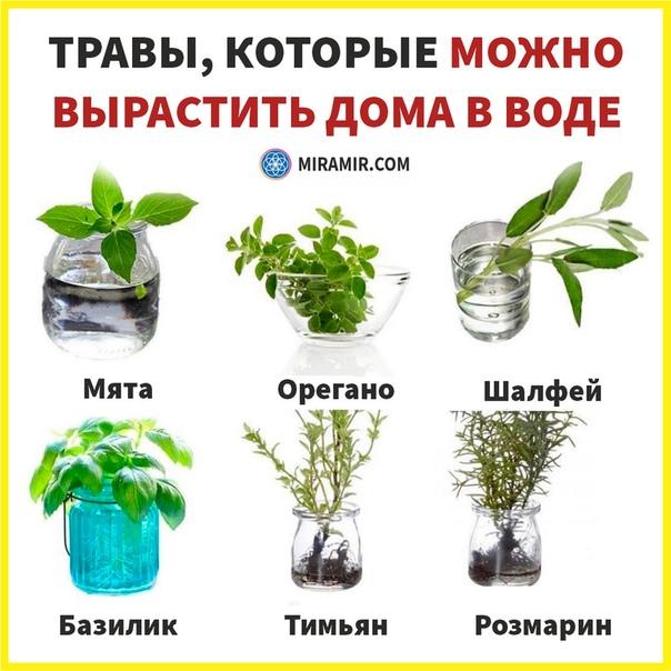 Божья коровка, или жук святой девы марии. польза, привлечение. против тли. виды. фото. — ботаничка.ru