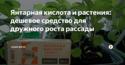 Янтарная кислота для растений — нормы внесений и инструкция по применению