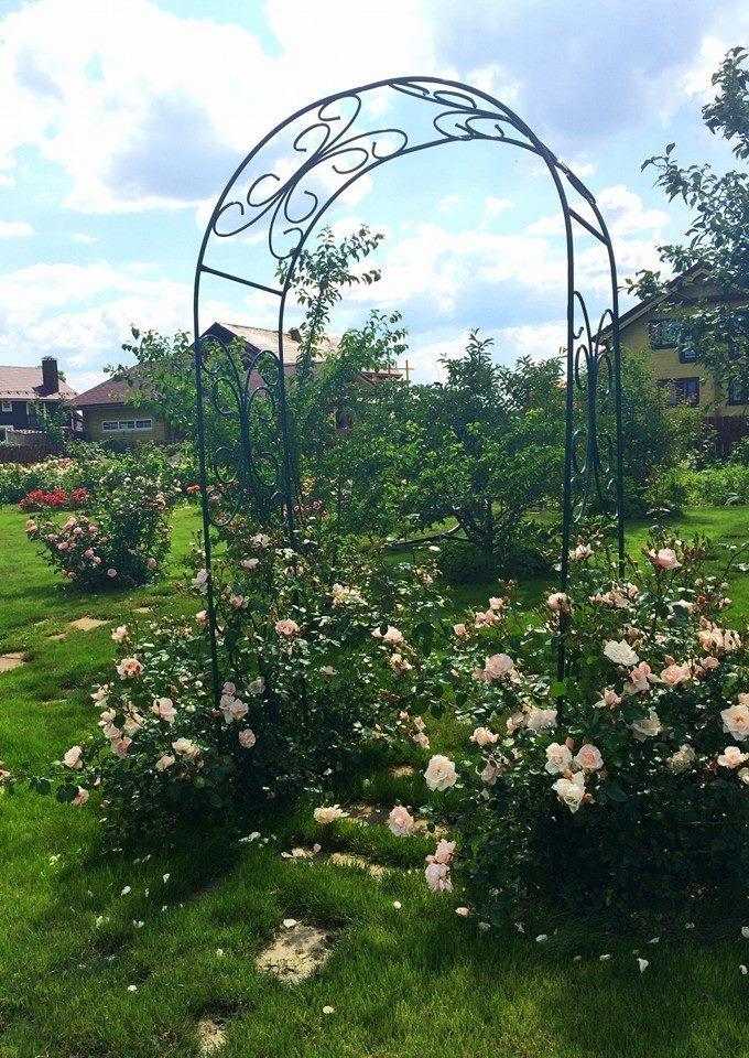Опора для плетистых роз: фото и пошаговые инструкции, как сделать шпалеру, башню, арку, вигвам и другие конструкции своими руками, а также подвязать к ним растениедача эксперт