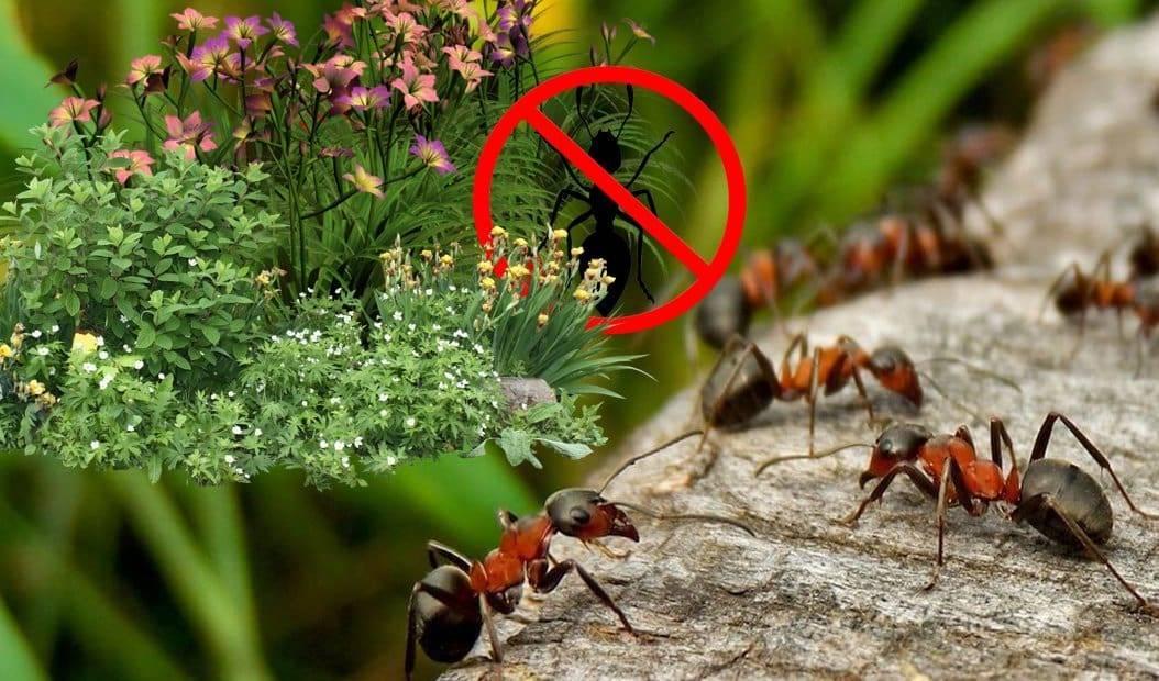 Пчелы по соседству, способы борьбы