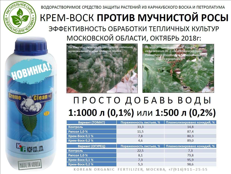 Роса мучнистая крыжовника и смородины | справочник пестициды.ru