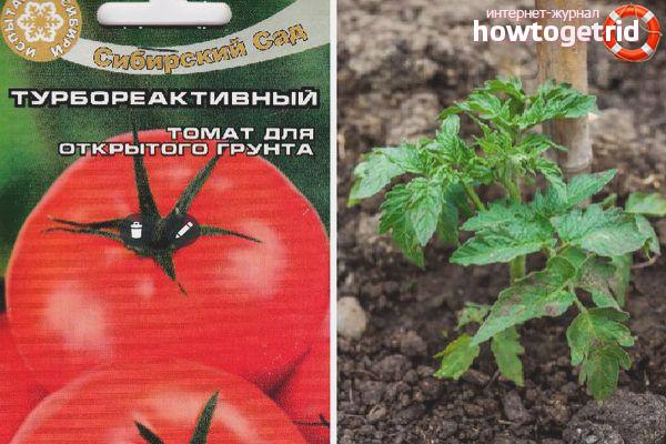 Самые урожайные сорта томатов - 30 лучших для открытого грунта с описанием и фото, крупные, ранние, для подмосковья, отзывы огородников