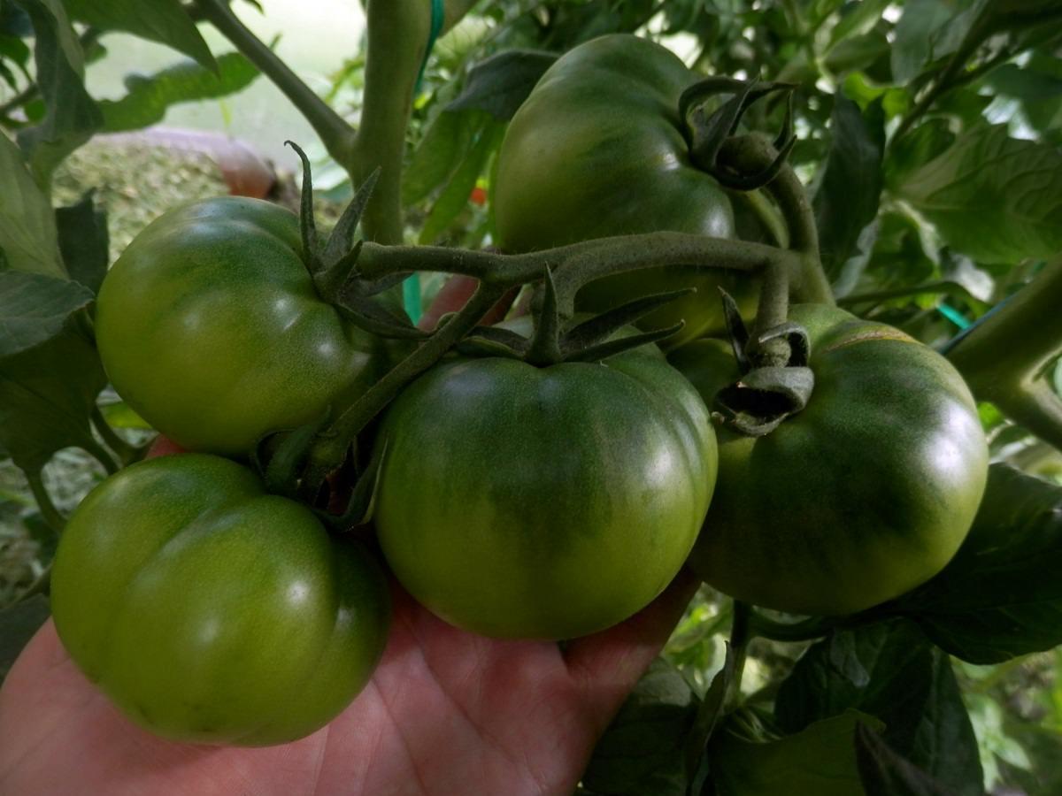 Характеристика томата сорта клубничное дерево - журнал садовода ryazanameli.ru