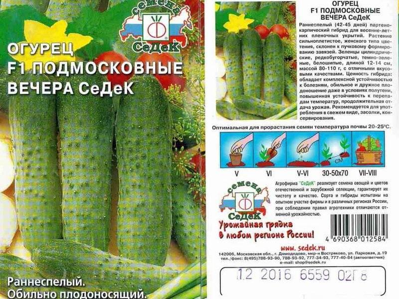 Огурец «подмосковные вечера»: описание характеристик, посадка и уход, урожайность сорта f1 и выращивание из семян (фото)