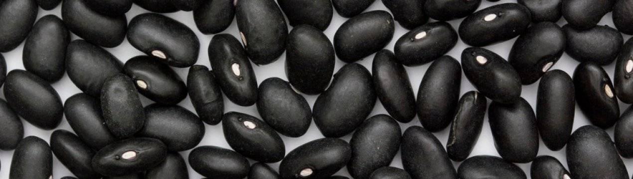 ТОП 10 правил выращивания фасоли Черный глаз, описание культуры, польза и хранение