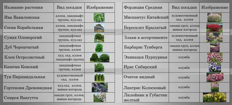 Виды и сорта астры (60 фото): многолетние белые, татарские и сибирские, шаровидные, высокие и низкие разновидности, махровые и агератовидные