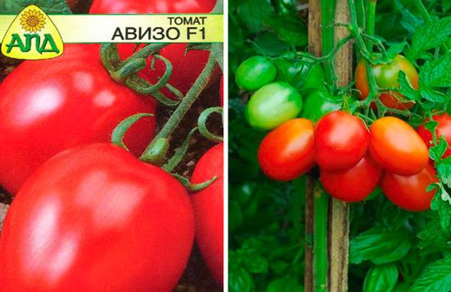 Томат сарра f1 - описание сорта гибрида, характеристика, урожайность, отзывы, фото