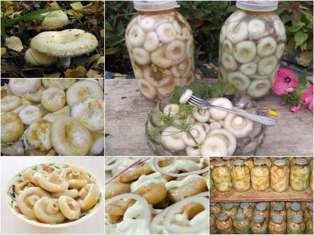 Рецепты приготовления белых груздей на зиму: фото, видео, пошаговое описание, как готовить грибные блюда
