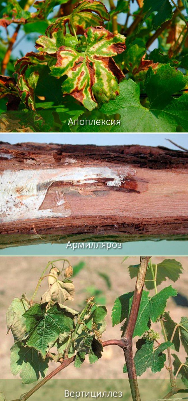Болезни и вредители яблонь: описание с фотографиями и способы лечения
