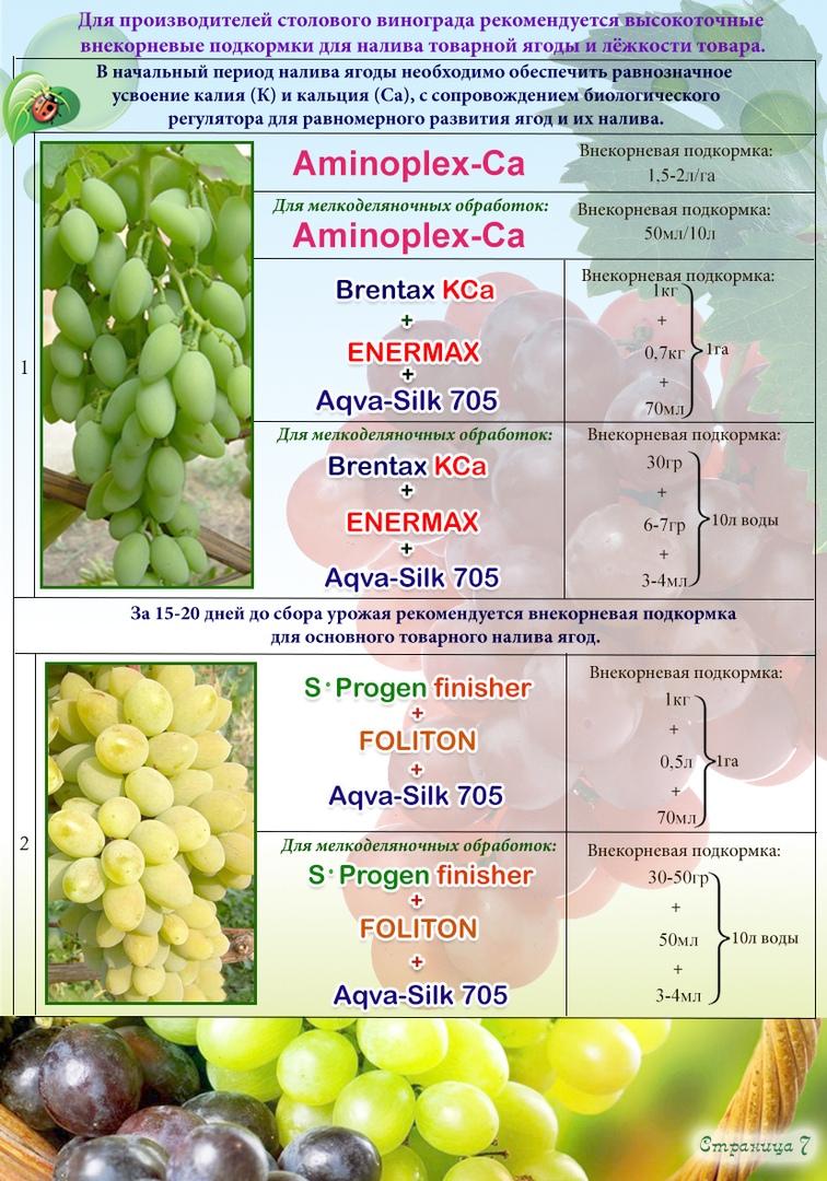 Как защитить виноград от ос: эффективные методы