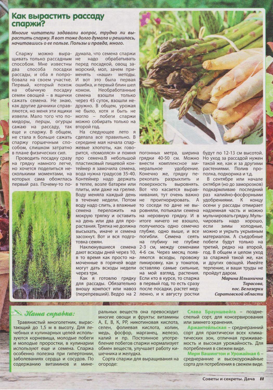 Что такое спаржа, ее сорта и где она растет, способы применения и вкусные рецепты