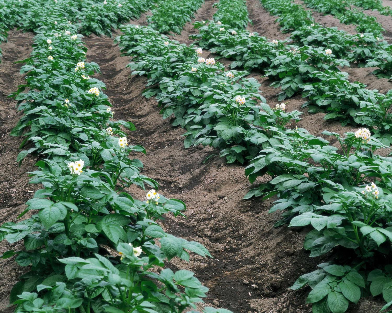 Как вырастить сою на огороде в открытом грунте, особенности посадки и ухода, сроки сбора и подкормка