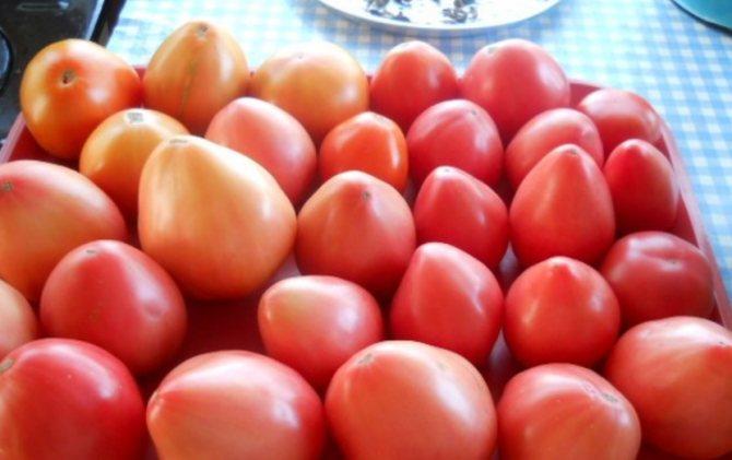 Сорт орлиный клюв – томат с необычной формой плодов