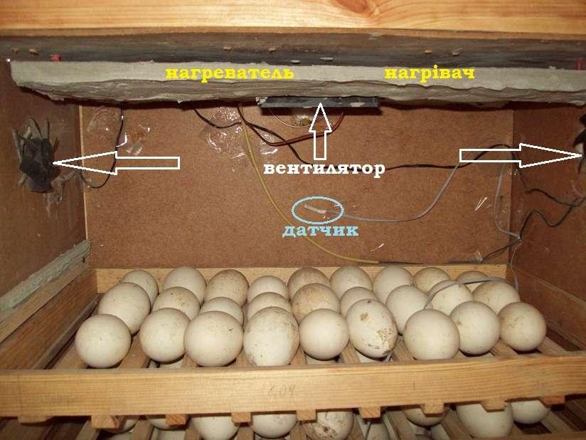Инкубатор изхолодильника: для яиц всех видов птицы | good-tips.pro