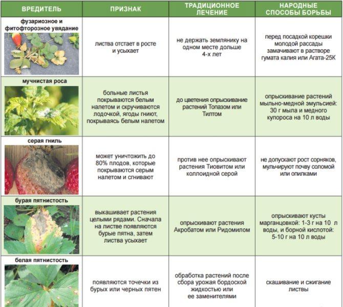 Как обработать малину от болезней и вредителей: способы и средства - sadovnikam.ru