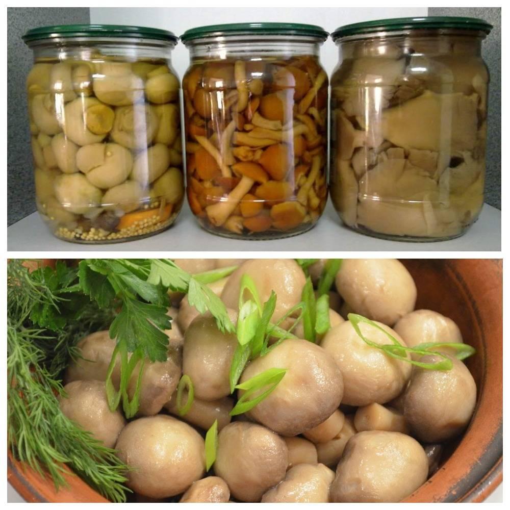 Важные правила хранения грибов. можно ли заморозить маринованные?