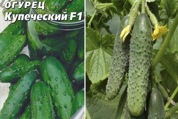 Описание сорта огурцов Купеческий и способы выращивания овоща