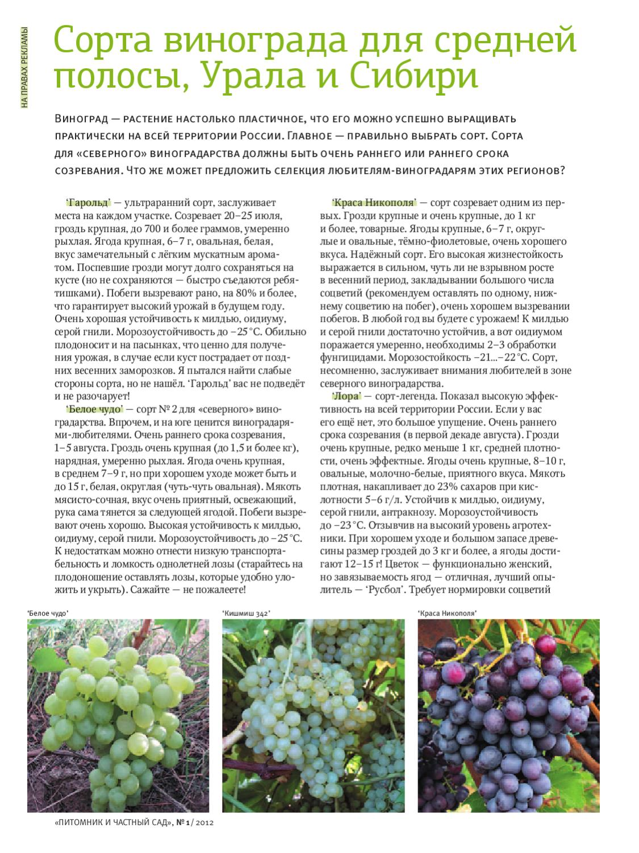 Виноград сорта юлиан – самый ранний урожай