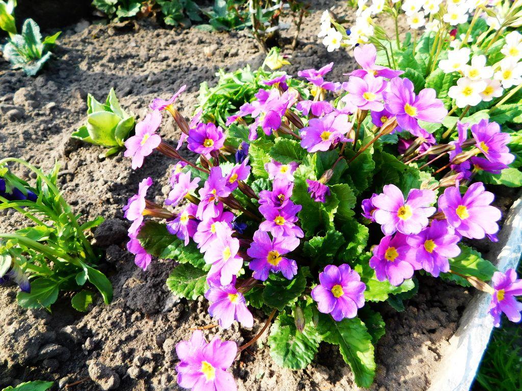Что посеять на рассаду: самые неприхотливые цветы, простые в выращивании и уходе