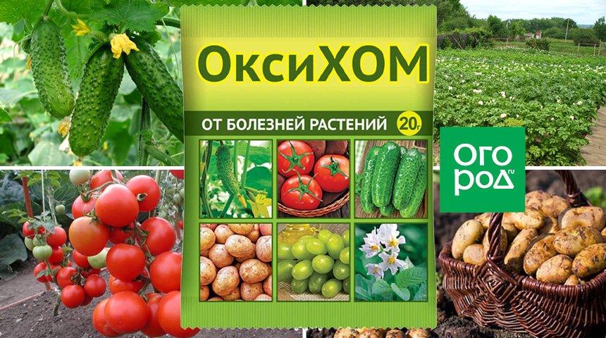 Фунгицид оксихом - характеристики и механизм действия