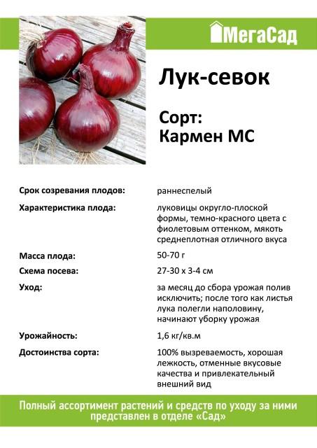 Лук кармен мс: характеристика и описание сорта, выращивание и уход