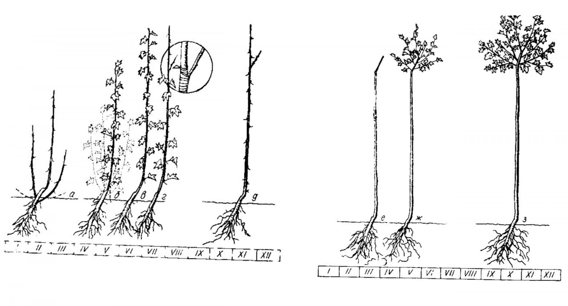 Как проводить обрезку крыжовника весной, осенью и зимой?