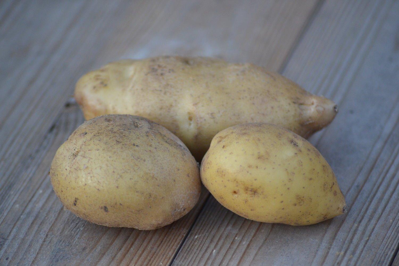 Картофель лорх: описание сорта, фото кустов и урожая, отзывы фермеров о картошке