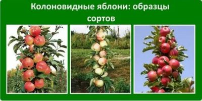 Почему яблоня не цветет: полный список причин и лучшие способы решения проблемы